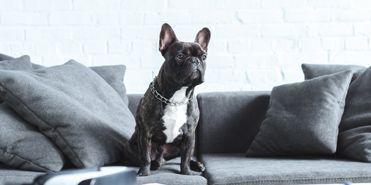 Picture of a Dog on a Pet Friendly Sofa